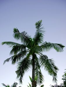 Free Tropical Palm Tree Stock Images - 9895874