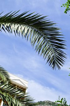 Free Palm Leaf Royalty Free Stock Photo - 9895985