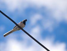 Free Bird Royalty Free Stock Image - 9896086