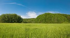 Free Green Meadow Royalty Free Stock Photography - 9896147