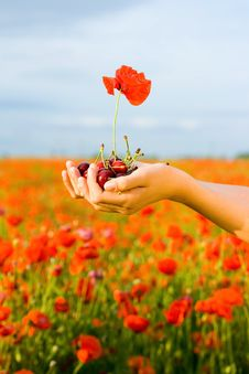 Free Hand With Cherry And Poppy Royalty Free Stock Photos - 9896308