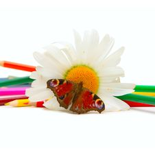 Free Butterfly, Chamomille And Color Pencils Royalty Free Stock Photos - 9896358