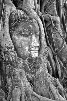 Free Buddha S Head Stock Image - 9897451
