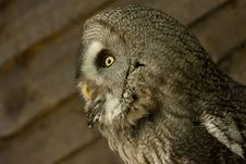 Free Side View Of Owl Stock Photo - 9897930