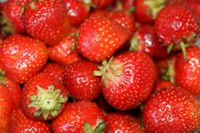 Free Organic Strawberries Royalty Free Stock Images - 9898289
