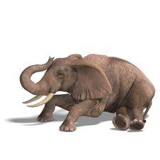 Free Huge Elephant Stock Image - 9898461