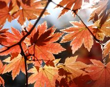 Autumnal Foliage Stock Image