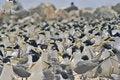 Free Birds Everywhere! Royalty Free Stock Image - 990946