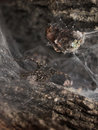 Free Spider Lurking Inside Of A Tree 02 Royalty Free Stock Images - 991369