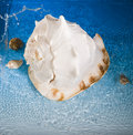 Free Shell And Blue Water Stock Image - 991821