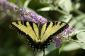 Free Butterfly 1 Stock Photo - 997740