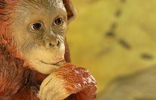 Free Chimp Stock Images - 990784