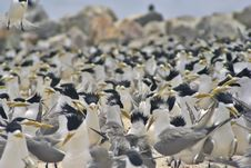 Free Birds Everywhere! Royalty Free Stock Image - 990946