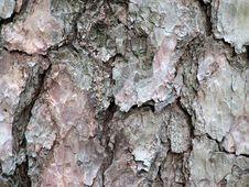 Free Bark Background Royalty Free Stock Photo - 991155
