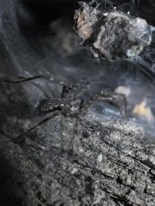 Spider Lurking Inside Of A Tree Royalty Free Stock Photos