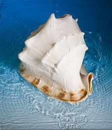 Free Shell And Blue Water Royalty Free Stock Photography - 991777