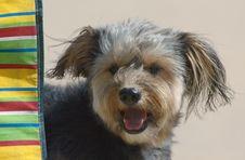 Free Cute Puppy Stock Photo - 992260