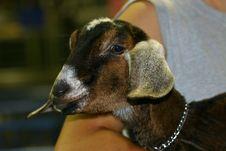 Free Goat Stock Photography - 994712