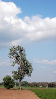 Free Old Tree Royalty Free Stock Image - 995406