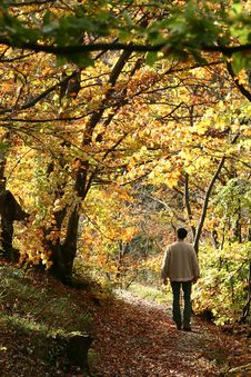 Free Alsacian Landscape01 Stock Image - 995491