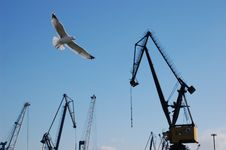 Free Gull And Cranes Royalty Free Stock Photography - 995827
