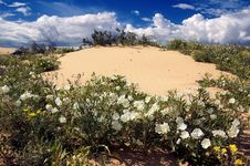 Free Desert Flowers Stock Image - 995861