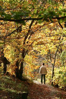 Free Alsacian Landscape Stock Photography - 995862