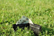 Free Wallet With Cash At Grass Royalty Free Stock Photo - 996035