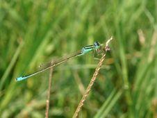 Free Dragonfly Royalty Free Stock Photo - 996605