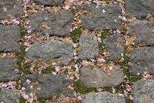 Free Paving Stones Stock Images - 997144