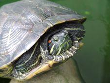 Free Turtle Stock Photos - 997173