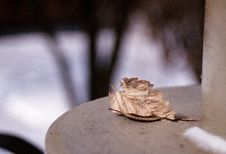 Free Autumn Leaf Is A Stale Good Royalty Free Stock Photo - 997635