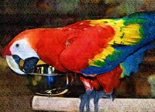 Free Scarlet Macaw Painting Stock Photography - 997642