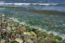 Free Pebbled Shore Royalty Free Stock Photos - 999008