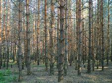 Free Wood Royalty Free Stock Photos - 999018