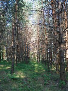 Free Wood Stock Photos - 999023