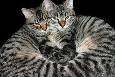 Free Cat Heart 1 Royalty Free Stock Photo - 999415