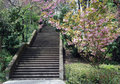 Free Concrete Steps And Flowering Bushes Royalty Free Stock Photo - 9901795