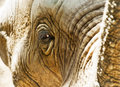 Free Zoo Animal Stock Photo - 9902590