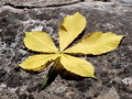 Free Yellow Leaf Royalty Free Stock Photography - 9904557