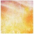 Free Sun Spider Web Stock Image - 9904771