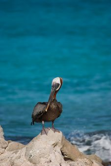 Pelican By The Ocean Stock Images