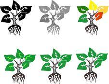 Free Plant Stock Image - 9902671