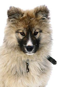 Free Shaggy Fluffy Dog Royalty Free Stock Photo - 9903735