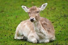 Free Deer Stock Photography - 9905732