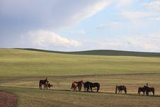Free Horses Royalty Free Stock Image - 9906346