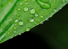 Free Water Drops On A Grass Stock Photography - 9907972