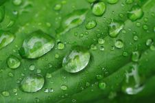 Free Water Drops On A Grass Royalty Free Stock Photo - 9907975