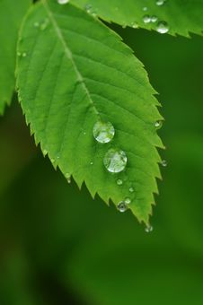 Free Water Drops On A Grass Stock Photos - 9907983