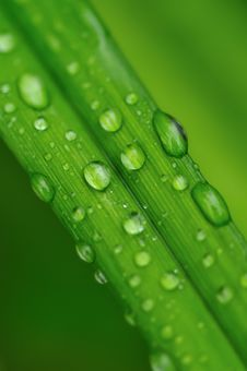 Free Water Drops On A Grass Royalty Free Stock Images - 9908019